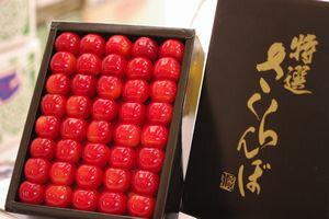 お中元紅秀峰さくらんぼ販売 化粧箱500g 2L〜3L 山形さくらんぼ通販ギフトは7月上旬