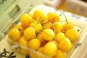 【月山錦】幻の黄色いさくらんぼ♪バラ詰め♪500g【山形産】