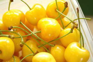 お中元月山錦さくらんぼ販売1kgバラ詰め2L〜3L幻の黄色い山形さくらんぼ通販ギフトは7月上旬