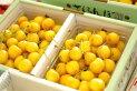 【月山錦】幻の黄色いさくらんぼ♪バラ詰め♪1kg【山形産】