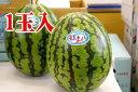 紅まくらスイカ 1玉入 L〜4L【神奈川三浦産及び山形産】