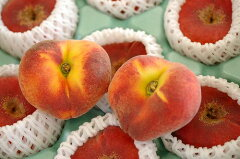 蟠桃(ばんとう) 大変希少な桃です♪約7玉~約11玉 【長野産及び福島産】