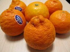 ピクシータンジェリン★激レア柑橘★デコポンにも似たような食味♪35個入 【アメリカ産】