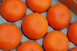 幻の柑橘!麗紅(れいこう)約3玉〜約6玉次世代の中晩柑橘【長崎県産】せとかにも似ている果実♪