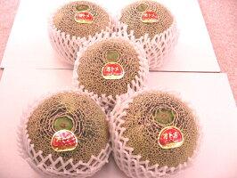 旭村オトメメロンお取り寄せ販売茨城産。糖度の見えるメロンを通販で。果物ギフトに糖度16度特秀2玉