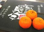 蜜るぽんかん通販 愛媛県保内共選ブランドのポンカンを販売取寄。中箱 愛媛産