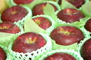シナノホッペ林檎取寄販売 真っ赤に色づく長野限定りんごを通販で。約5kg 約14玉〜約18玉 長野産