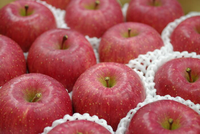 長野ふじりんごお取り寄せ販売 信州サンふじお歳暮ギフト通販 糖度約13度 5kg 約14玉~約18玉