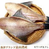 【魚津ブランド・無添加・富山湾産】カワハギ(ウマヅラハギ/200g)