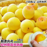 生梅 紀州南高完熟梅 1.8kg 「完熟梅」 和歌山県産 うめ ウメ 梅 梅干し