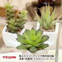 インテリアに人気の 多肉植物、小窓にも飾れます。送料無料ミニ多肉植物3種セット高さ7cm〜11cm...