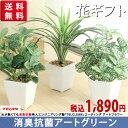 ミニテーブルグリーン選べる3種(ペペロミアorドラセナorフィットニア...
