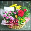 いい夫婦の日 開店祝いにもギフト 次々咲きます 季節の寄せ鉢シリーズ2 人気ランキング 花ギフト いい夫婦の日 開店祝いにも2018 プロデザイナ-特選