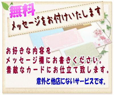誕生日 開店祝い  胡蝶蘭 大輪 白 3本立ち 九州、沖縄、北海道、四国、中国地方お届け不可