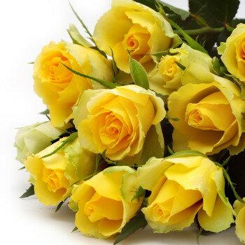 送料無料 お中元 開店祝い 開院祝い プレゼント おまかせ 黄色オレンジ系バラの花束 開院祝い 花 人気ランキング 花ギフト 花束 結婚記念日 (就任 送別 誕生日 などにも) バラ 就任 送別 81 花束