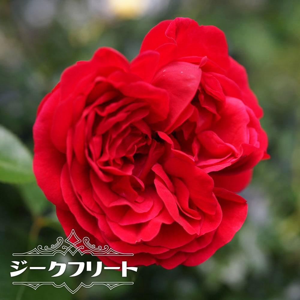 苗物, 花の苗物  6 121