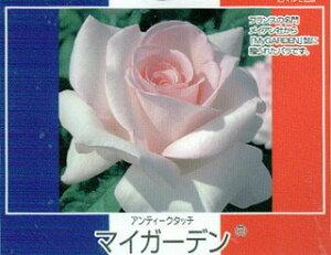 【バラ苗】 マイガーデン 「マイガーデン」誌に贈られたバラ。 大苗 四季咲き ピンク 強香 強健...