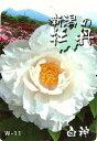 白の花が人気。牡丹(白系)白神(ハクシン)2年生苗