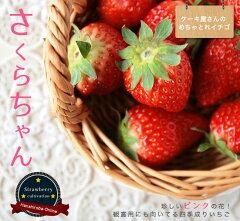いちご 苗 珍しい!観賞用にもなるピンク花品種のイチゴ苗 四季成り性で病気に強い! 果樹■と...