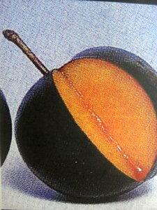 すもも バイオチェリー 「アメリカンチェリー」と 「プラム」とを交配した品種★ 果樹苗スモモ ...