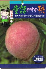 甘くて酸味の少ない桃太郎のモモ 果樹苗桃 苗 天津桃太郎 ( てんしんももたろう ) 1年生 接ぎ...