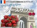 サワーチェリー ノースサワー 新品種のサクランボ 果樹苗木 果樹苗サワーチェリー 【 ノースサ...