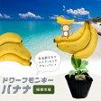 ■本数限定■矮性バナナ ドワーフモンキーバナナ ポット苗 果樹苗木 熱帯果樹 【予約販売】【2017年5月下旬頃お届け予定】