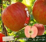 りんご 苗木 ルビースイート 1年生 接ぎ木 苗