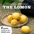 送料無料 レモンの木リスボンレモン 接木 超特価苗果樹苗
