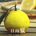日向夏 ( ひゅうがなつ / ニューサマーオレンジ ) 1年...