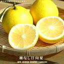 種無し日向夏 ( ニューサマーオレンジ ) 1年生 接ぎ木 ...