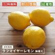 送料無料 レモンの木 ラフマイヤー 1年生 接木 鉢植え 苗 果樹苗
