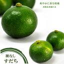 柑橘 種無し すだち 2年生 接ぎ木 ロングスリット 鉢植え...