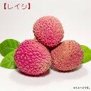 白加賀(実梅)《果樹苗》