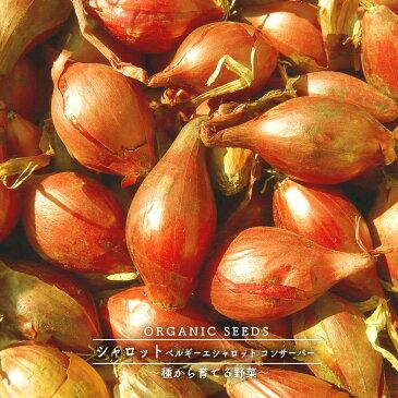 有機種子 シャロット 種 (ベルギーエシャロット、コンサーバー) 【 ネコポス可 】