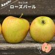 りんご 苗木 ローズパール PVP 1年生 接ぎ木 苗 果樹 果樹苗木