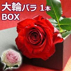 大臣賞 バラ1本BOXバラ 花束を誕生日(お誕生日 還暦)のお祝いのお花(花束)に。退職祝い(退職 送別 送別会)結婚記念日(記念日)結婚祝いのお花のプレゼント ギフト(贈り物)やお見舞いにばら 花束を。赤/ピンク/の薔薇の花束を送料無料で 花 (1輪 ボックス) 花束 2015