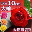 バラ1本BOX(バラの花束)結婚記念日 プレゼントに妻へ 誕生日 プロポーズに大輪 薔薇を。退職祝い(送別)に1輪(一輪 一本) 還暦のギフトにも 送料無料