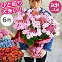 母の日 あじさい 鉢植え プレゼント ギフト 花【ワンサイズ...