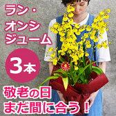敬老の日 花 プレゼント オンシジュームの鉢植え(3本立 花鉢 鉢花)ギフト 蘭 オンシジウム 送料無料