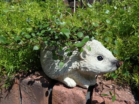 ガーデニング ガーデン はりねずみ 寄せ植え 置物 陶器アニマル 動物 雑貨【花遊び】『アニマルプランターポット・はりねずみ』