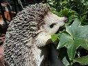 ガーデニング ガーデン はりねずみ アニマル プランター寄せ植え ハンギング 雑貨 【花遊び】『ハンギング!ヘッジホッグ』