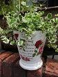ガーデニング ガーデン 植木鉢 バラ ローズ 雑貨プランター 寄せ植え アンティーク【花遊び】『カラフルローズラウンドポット・ホワイト』