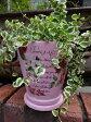 ガーデニング ガーデン 植木鉢 バラ ローズ 雑貨プランター 寄せ植え アンティーク【花遊び】『カラフルローズラウンドポット・ピンク』【9月上旬のお届け予定です】