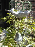 バードゲージフェンスアイアンガーデニングミニフェンス柵ガーデンアンティーク【花遊び】『フラワーバードフィダーピック』