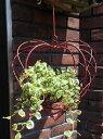 ガーデニング ガーデン ハンギング アイアン ウエルカム壁掛け 棚 寄せ植え ガーデニング ガーデン【花遊び】『ハンギング♪レッドハート・S』
