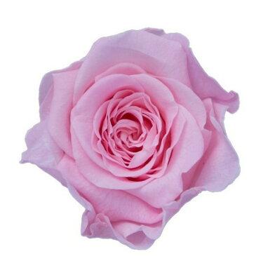 即日 【プリザーブド】KIARA/ローズS(12輪)ブライダルピンク/PG001-02《 プリザーブドフラワー プリザーブドフラワー花材 バラ(ローズ) 》