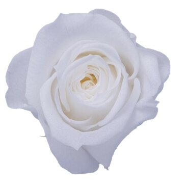 即日 【プリザーブド】KIARA/ローズM(9輪)ピュアホワイト/PG002-01《 プリザーブドフラワー プリザーブドフラワー花材 バラ(ローズ) 》