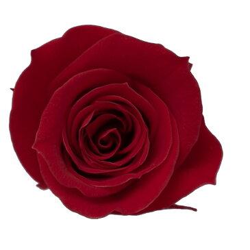 即日 【プリザーブド】KIARA/ローズM(9輪)レッド/PG002-05《 プリザーブドフラワー プリザーブドフラワー花材 バラ(ローズ) 》