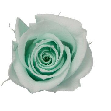 即日 【プリザーブド】KIARA/ローズM(9輪)ミンティグリーン/PG002-11《 プリザーブドフラワー プリザーブドフラワー花材 バラ(ローズ) 》